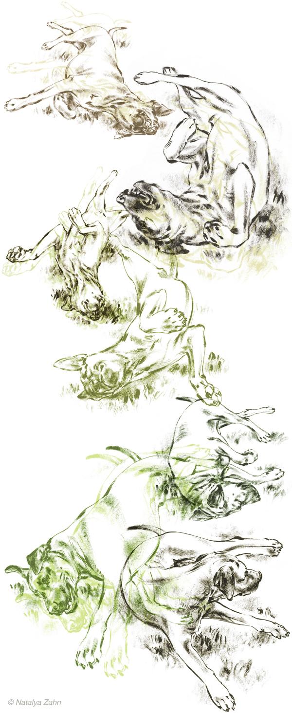 Rhodesian Ridgeback Oscar rolling in the grass