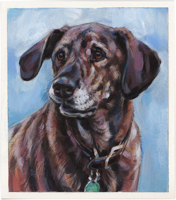 Rescue dog, Sara the Plott Hound