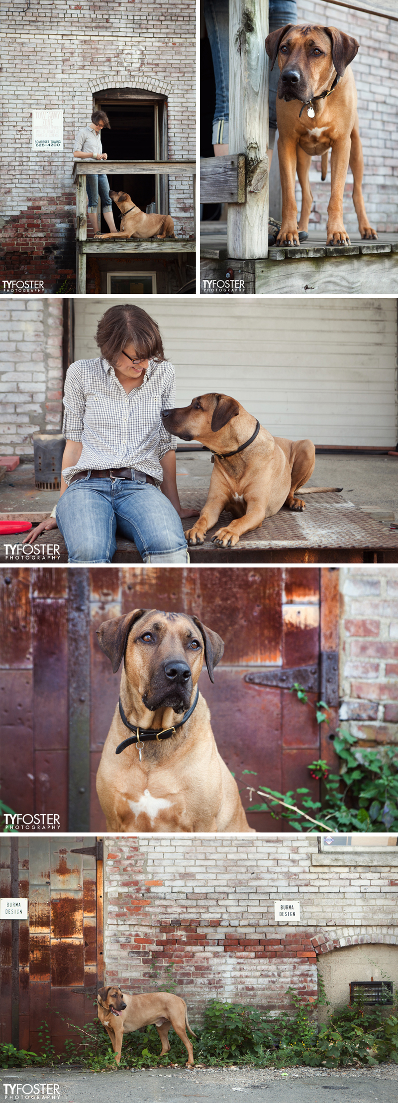 Ty Foster Photography, Rhodesian Ridgeback