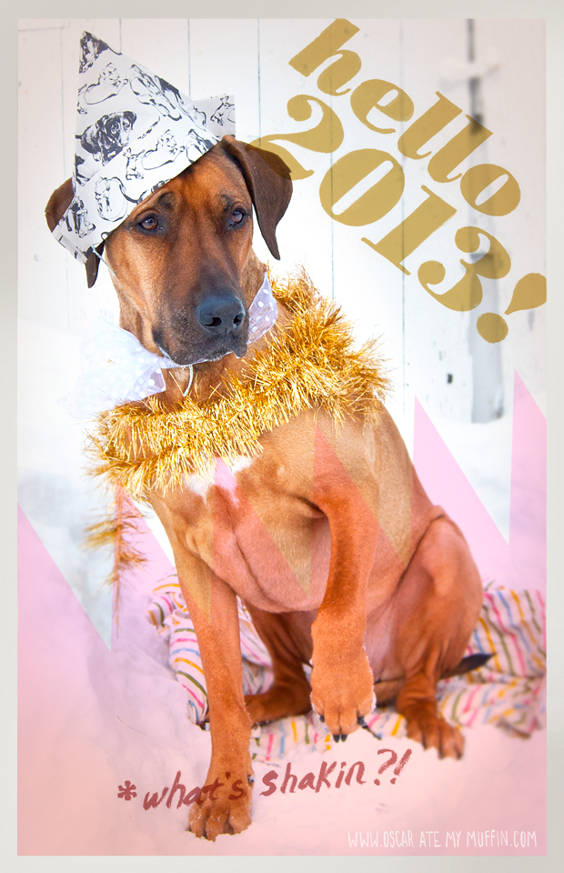 Rhodesian Ridgeback dog Oscar's Happy New Year!
