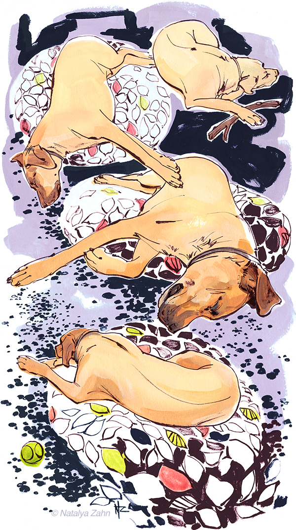 sketchbook drawing of sleeping Rhodesian Ridgeback dog