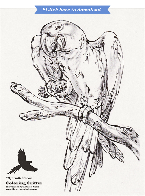 Hyacinth Macaw coloring book page