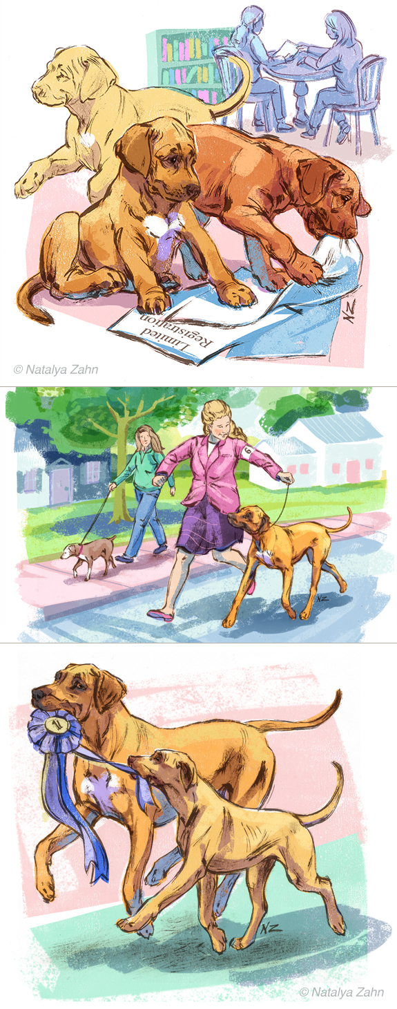 Rhodesian Ridgeback illustrations by Natalya Zahn for The Ridgeback Register magazine