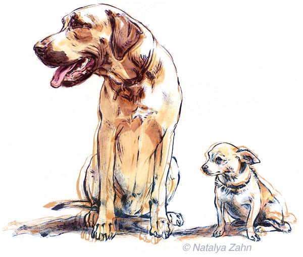 Rhodesian Ridgeback and Chihuahua dogs