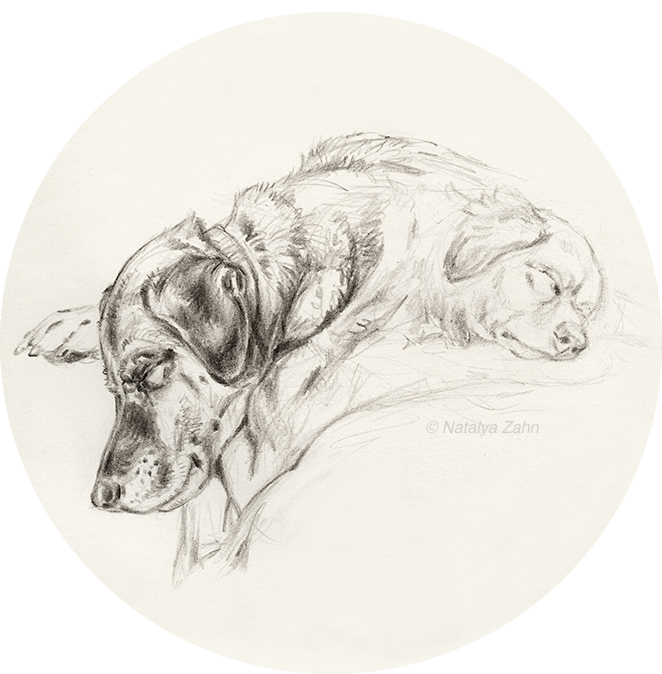 Sketch of Henry and Charlie dog sleeping